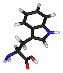 structure of tryptophan