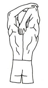 Sample Routine - 3 day No equipment Bodyweight: Intermediate Shoulder%2520triceps%2520stretching
