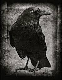 external image blackbird.jpg
