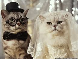 http://tbn3.google.com/images?q=tbn:H-2LDnDm2Uk8TM:http://www.wallpaperslibrary.com/Wallpapers/Funny/funny-cats-wedding-wallpaper.jpg