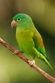 http://tbn3.google.com/images?q=tbn:VEw_OKcCB5LK5M:http://www.selvaverde.com/images/pics/birdFauna.jpg