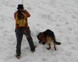 cane valanga 2 Trentino: Sciatrice diciottenne muore contro un albero. In Val di Fiemme salvato sci alpinista dalla valanga.