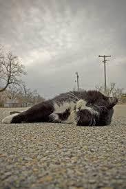 Dead Cat Picher, Oklahoma