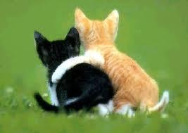 http://tbn3.google.com/images?q=tbn:dUm_BhqwxwgW9M:http://i165.photobucket.com/albums/u46/DominicaCH/love-cats.jpg