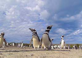 Puerto Madryn - Peninsula Valdes, Patagonia