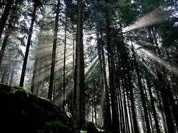 bosco Valle di Fiemme, due metri di bosco ogni minuto