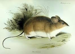 معلومات و نصائح تفيدك في حياتك اليومية Mouse