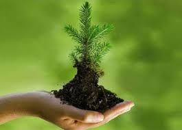 environment_plant.jpg