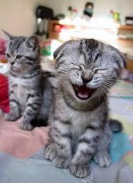 KatzeLachen.jpg