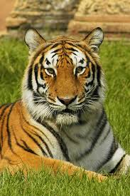 http://tbn3.google.com/images?q=tbn:uumbW53DPW-AHM:http://india.pordescubrir.com/wp-content/uploads/2008/09/fauna-india.jpg