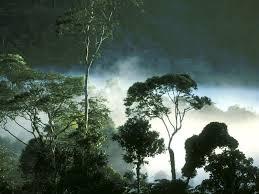 Hutan Topis Indonesia