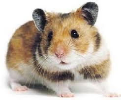 20090313-today-hamster1.jpg