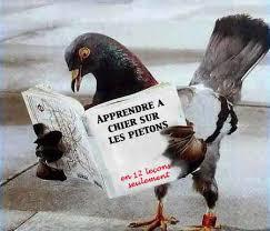 korz_3008200219_pigeons_fr.jpg